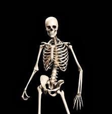 human anatomy essays anatomy of an essay on emaze