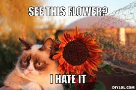 Grumpy Cat Meme | grumpy-cat-meme-generator-see-this-flower-i-hate ... via Relatably.com