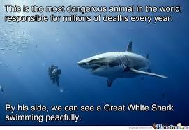 Most Dangerous Animal In The World by tigress - Meme Center via Relatably.com