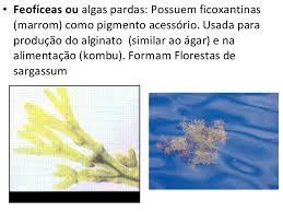 Resultado de imagem para IMAGENS DE FLAGELADO, BOLOR OU MOFO