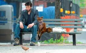 Keanu Charles Reeves & dejected fox | Funny Animals | Pinterest ... via Relatably.com