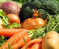 <b>Удобрение овощных</b> культур — AgroXXI