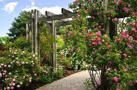 27 Super Cool Backyard <b>Garden</b> Ideas (PHOTOS)