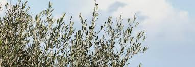<b>Pure Greek Olive</b> Oil by <b>Korres</b> - Inspired by Nature's Best