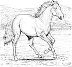 Раскраски для девочек распечатать лошадей