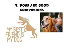 Dogs are good companions     SlideShare