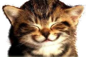 Image result for happy cats