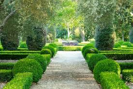 Image result for boxwood hedges