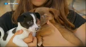 APA- Associação de Protecção aos Animais de Torres Vedras | Animais Anónimos