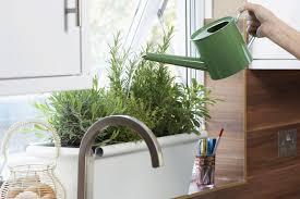Kitchen Windowsill Herb Garden How To Grow Herbs Indoors On A Sunny Windowsill