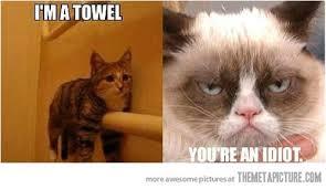 Funny Cat Meme Tumblr - funny cat meme tumblr also Meme Bibliothek via Relatably.com