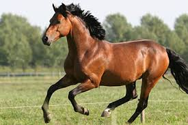 Image result for images of horses