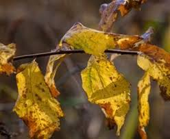 Newly Planted <b>Tree Leaves</b> Turning Brown, Yellow or Wilting ...