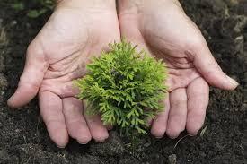 Нужно ли использовать <b>удобрение для хвойных растений</b> и зачем