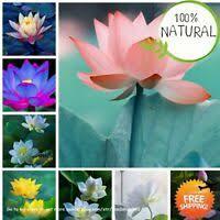 <b>5pcs Bowl Lotus</b> Hydroponics Plant Aquatic Plants Blue | eBay