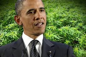Image result for obama marijuana
