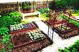 Small Picture Home Vegetable Garden Design Layouts Ideas Unique With Wooden