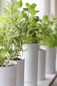 Kitchen Windowsill Herb Garden 17 Best Ideas About Window Herb Gardens On Pinterest Window