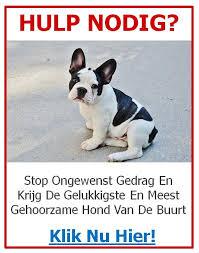 Disclaimer - Franse Bulldog Training