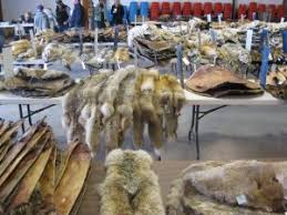 2018-<b>2019 Fur</b> Prices: Trapping Today's <b>Fur</b> Market Forecast ...