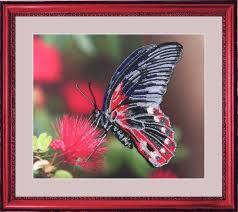 <b>Наборы для вышивания Butterfly</b>, Разноцветный (модель 3101 ...