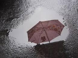 Buy reflection umbrella? | Frank