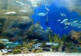 أكبر تجميع لأجمل صور من اعماق البحار (سبحان الله الخالق العظيم) Images?q=tbn:ANd9GcR5VCSx40mTHPEX9mvUGjE8ffKMoJqKf390tIews-gCt_0EhWnJgQ