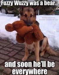 Furry Memes on Pinterest | Funny Animal, Funny pictures and Animal ... via Relatably.com