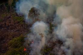 <b>Rainforest</b> Foundation US - Securing Rights, Protecting Lands