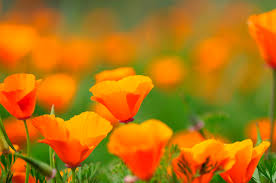 Different Types of <b>Orange Flowers</b>