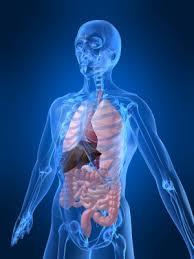 Resultado de imagen de el cuerpo humano