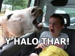 Funny-Horse-Memes-13.jpg via Relatably.com