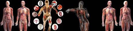 anatomy physiology biochemistry international journal apbij anatomy physiology biochemistry international journal apbij juniper publishers