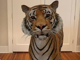 Google's <b>3D</b> animals turn you into a <b>Tiger</b> King at home. Here's how ...
