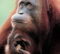 Risultati immagini per scimmia produttiva.