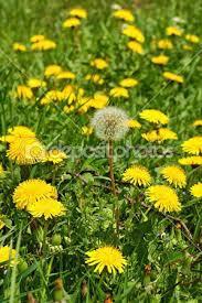 Resultado de imagem para imagens de florzinhas pequenas