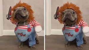 Tiny <b>Dog Dresses</b> Up As Chucky - YouTube
