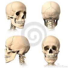 <b>Человеческий череп</b>, 4 взгляда. | Рисунки черепов, <b>Череп</b> и ...