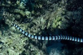 Resultado de imagen para serpiente electrica roja