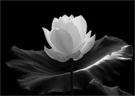 Risultati immagini per bellezza spirituale immagini