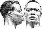 negro race