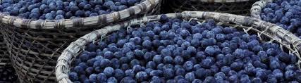 7 <b>Everyday</b> Foods from the <b>Rainforest</b>   <b>Rainforest</b> Alliance