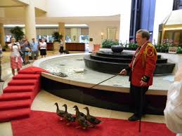 duck master salary some hotels hire these guys to duck master salary 85 000 some hotels hire these guys to take care