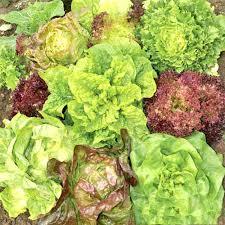 <b>Салат</b> Всесезонный, <b>смесь</b> семян (65354): купить <b>семена</b> почтой ...
