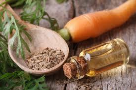 Imagini pentru ulei de morcov