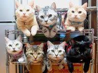 500+ รูปภาพที่ดีที่สุดในบอร์ด <b>cat</b> ในปี 2020 | แมว, แมวน้อย, สัตว์