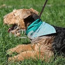 <b>Охлаждающая</b> цветная <b>косынка</b> для <b>собаки</b> Айсдей Пет