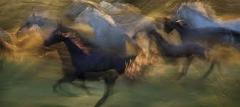 <b>Horses Art</b> Prints | iCanvas