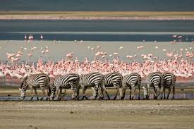 Image result for NGORONGORO CRATER