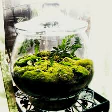 Image result for terrarium moss